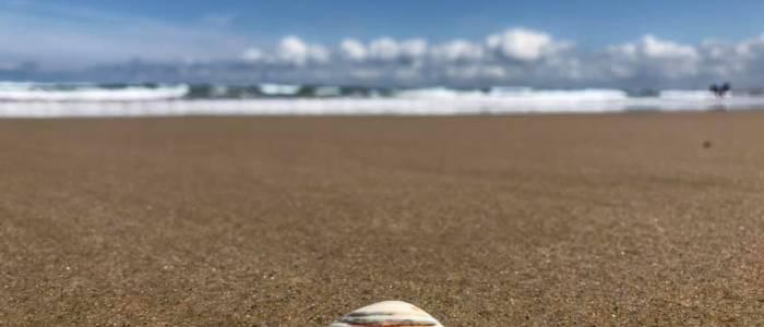 Les aventures vous attendent sur nos plages - Coquillages et crustacés - Centre de séjour de Soulac sur Mer